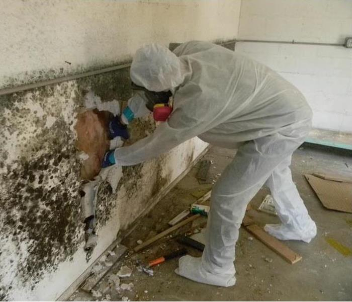 Mold Remediation Conditions In Conway & Faulkner Counties Might Be Right For Mold